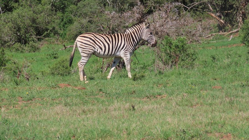 addo-park-tours-pic (2)