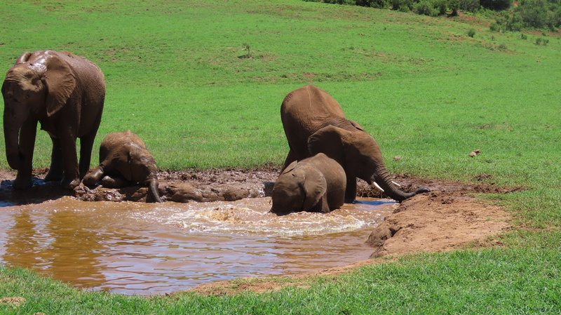 addo-park-tours-pic (5)