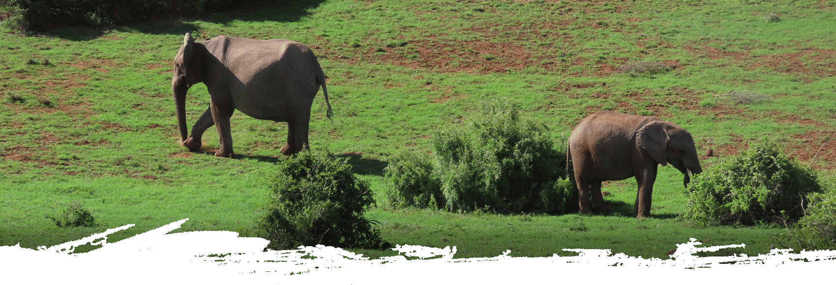 addo-park-tours-slide3