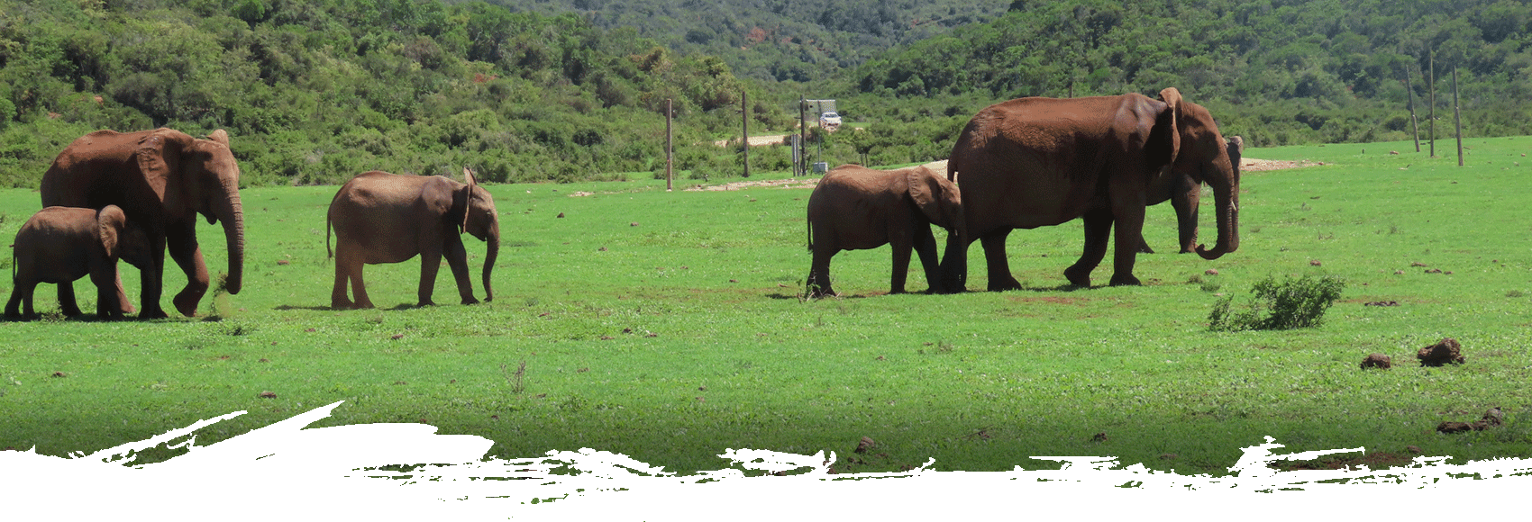 addo-park-tours-slide8